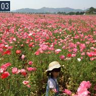 春先に笠岡のポッピー畑に行って来ました。休日はよく家族でお出かけします。写真は4歳の娘です。癒しです。