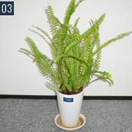 植物 パソコンのそばでほっと一息。